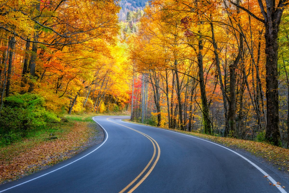 fall foliage road trips