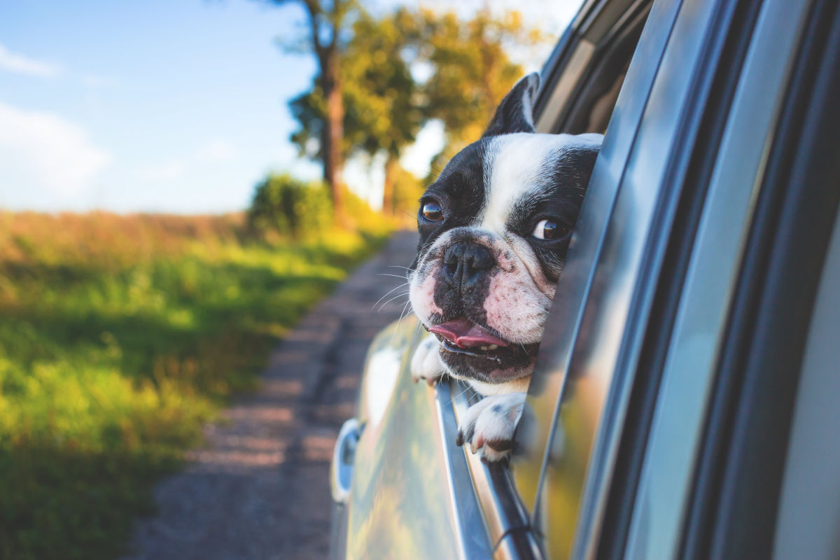 pet-friendly rental car companies